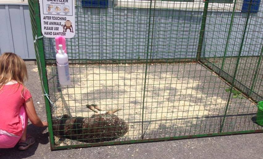 A little girl finds the kangaroo collapsed with heat stroke