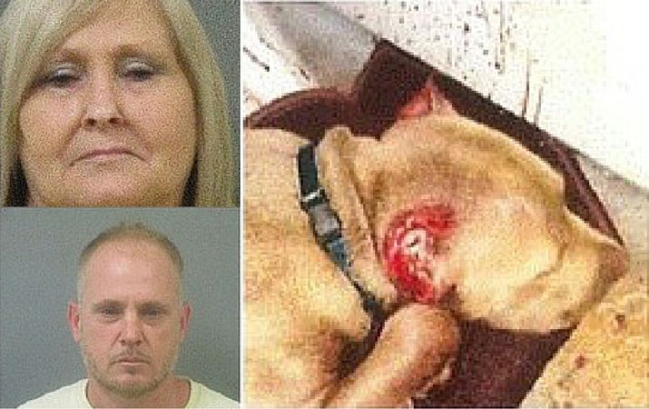 Mother & Son Arrested for Cutting Ears off Pit Bull Puppy with Household Scissors