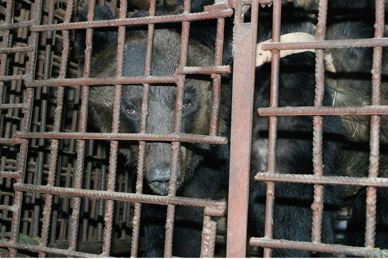Photo Credit: Animals Asia
