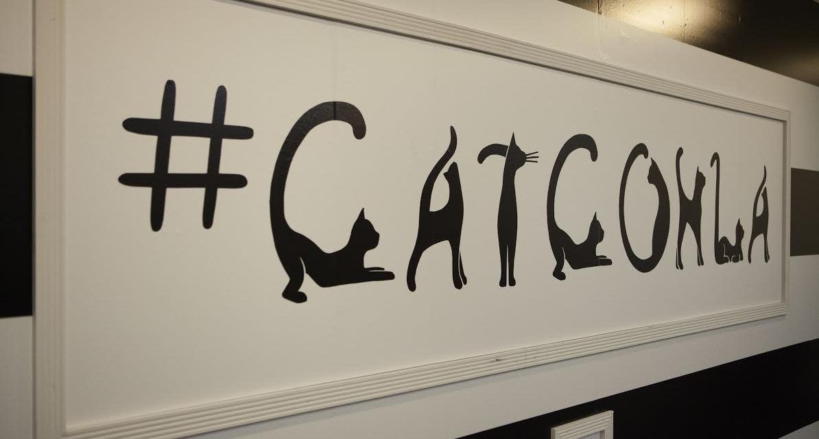 CatConLA Aims to 'Redefine the Cat Lady,' Give Kitties New Homes