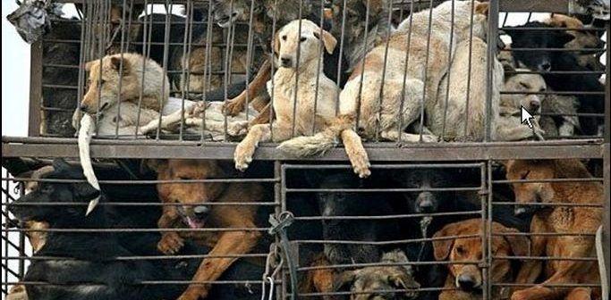 dogs-in-trucks