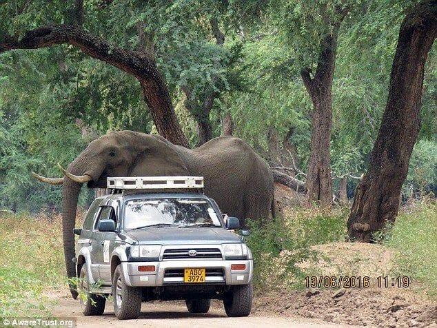 injured elephant approaches vehicle