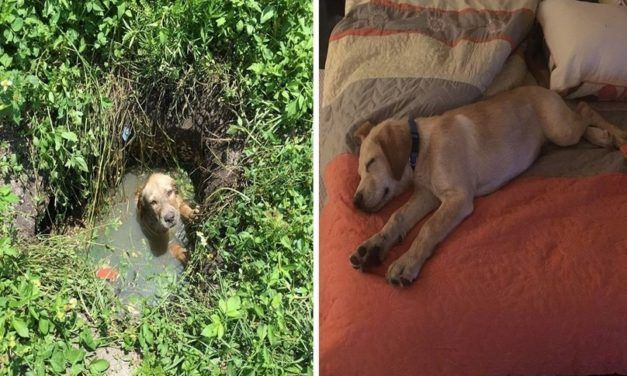 Terrified Puppy Stuck in Septic Drain Adopted by Cop who Rescued Him