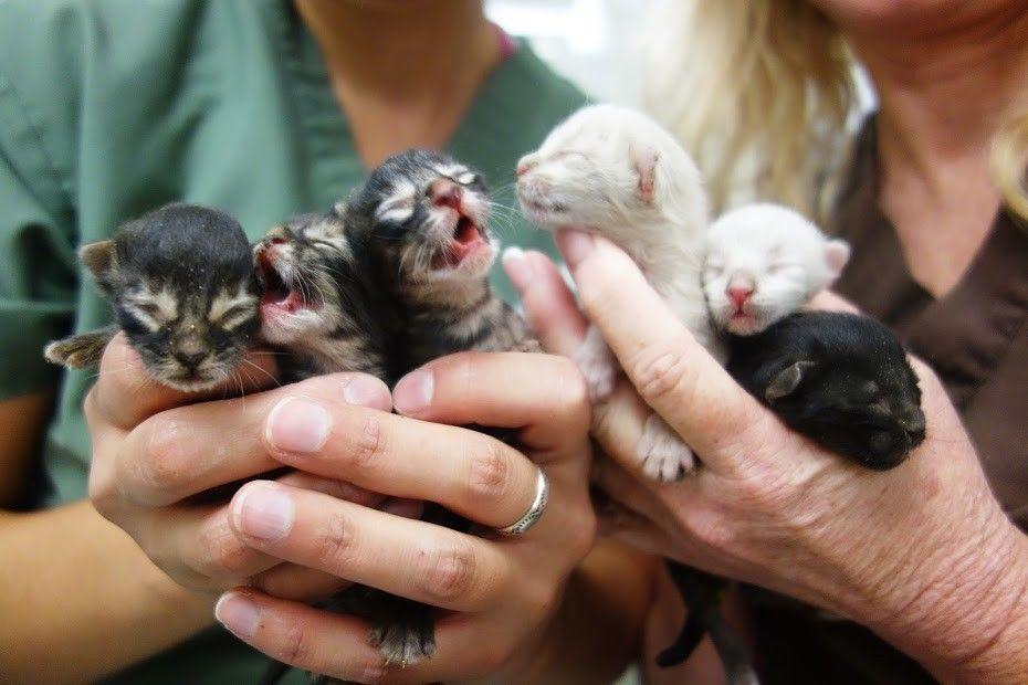 Garbage Man Rescues 6 Kittens Found in Dumpster