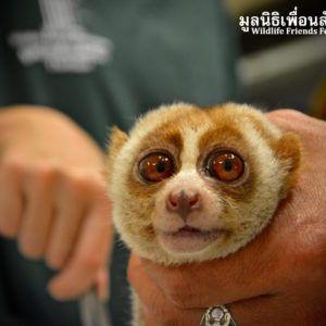 Photo Credit: Wildlife Friends Foundation