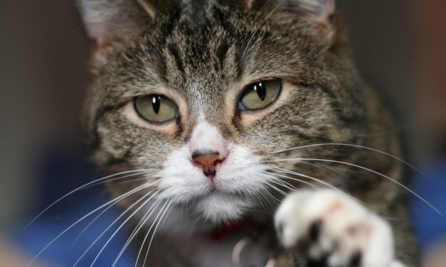 These Insanely Loyal Cats Show Why Felines Are 'Man's Best Friend,' Too!