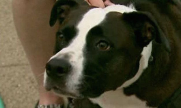 Man Blows off Hand Lighting Fireworks; Hand is Retrieved by Dog