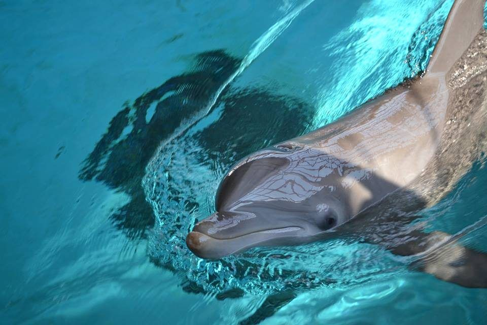 Coming Soon: North America's First Seaside Dolphin Sanctuary