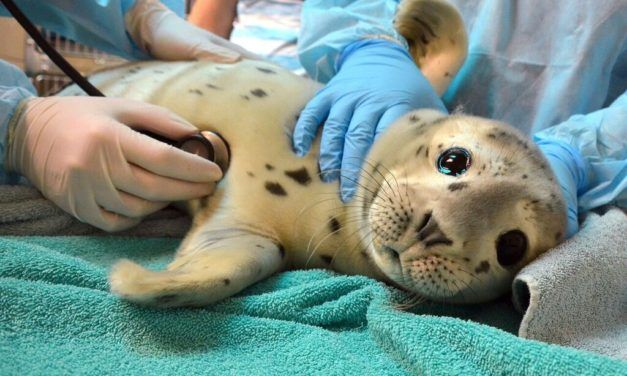 People Are Killing Baby Seals for Selfies