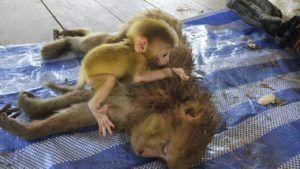 Photo Credit: Wildlife Friends Foundation Thailand