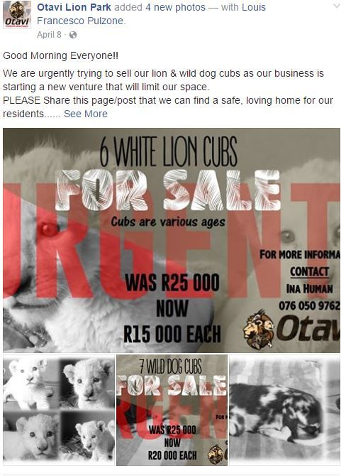 Screenshot of Otvali advertising white lions for sale on their Facebook page