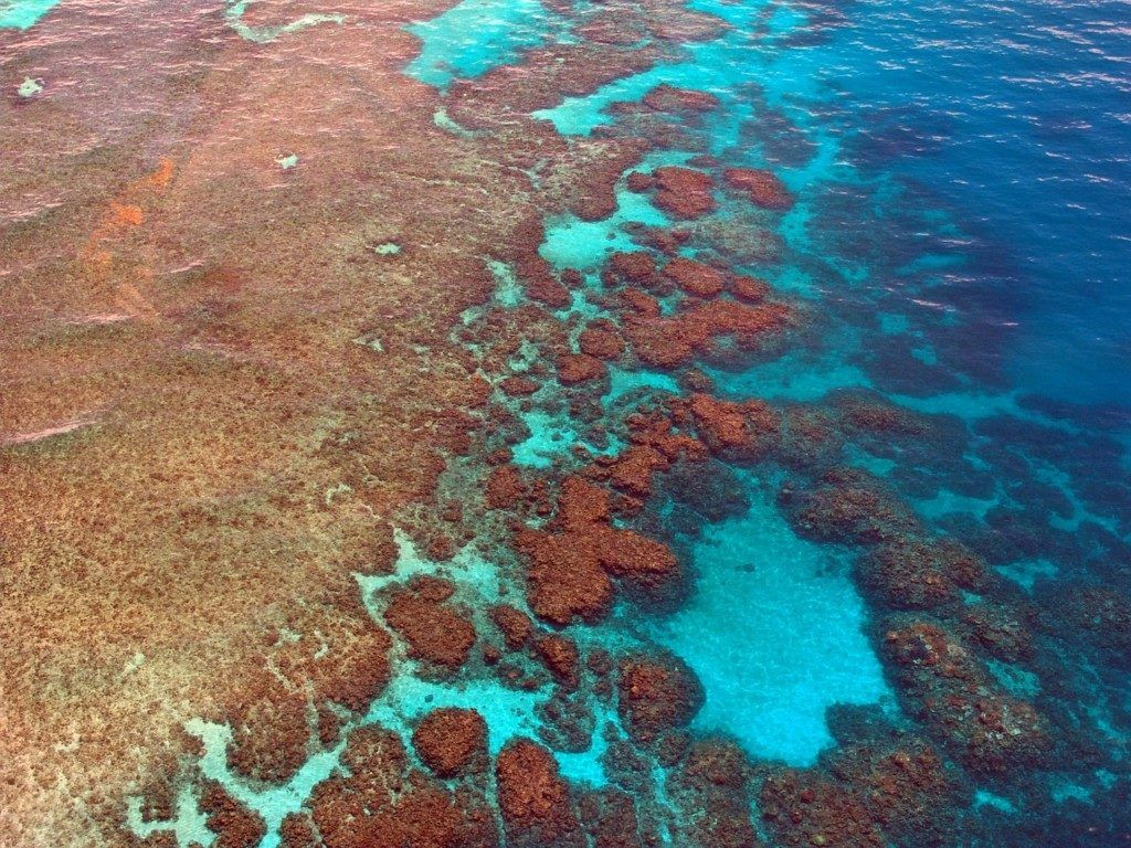 Coral reef are threatened by climate change