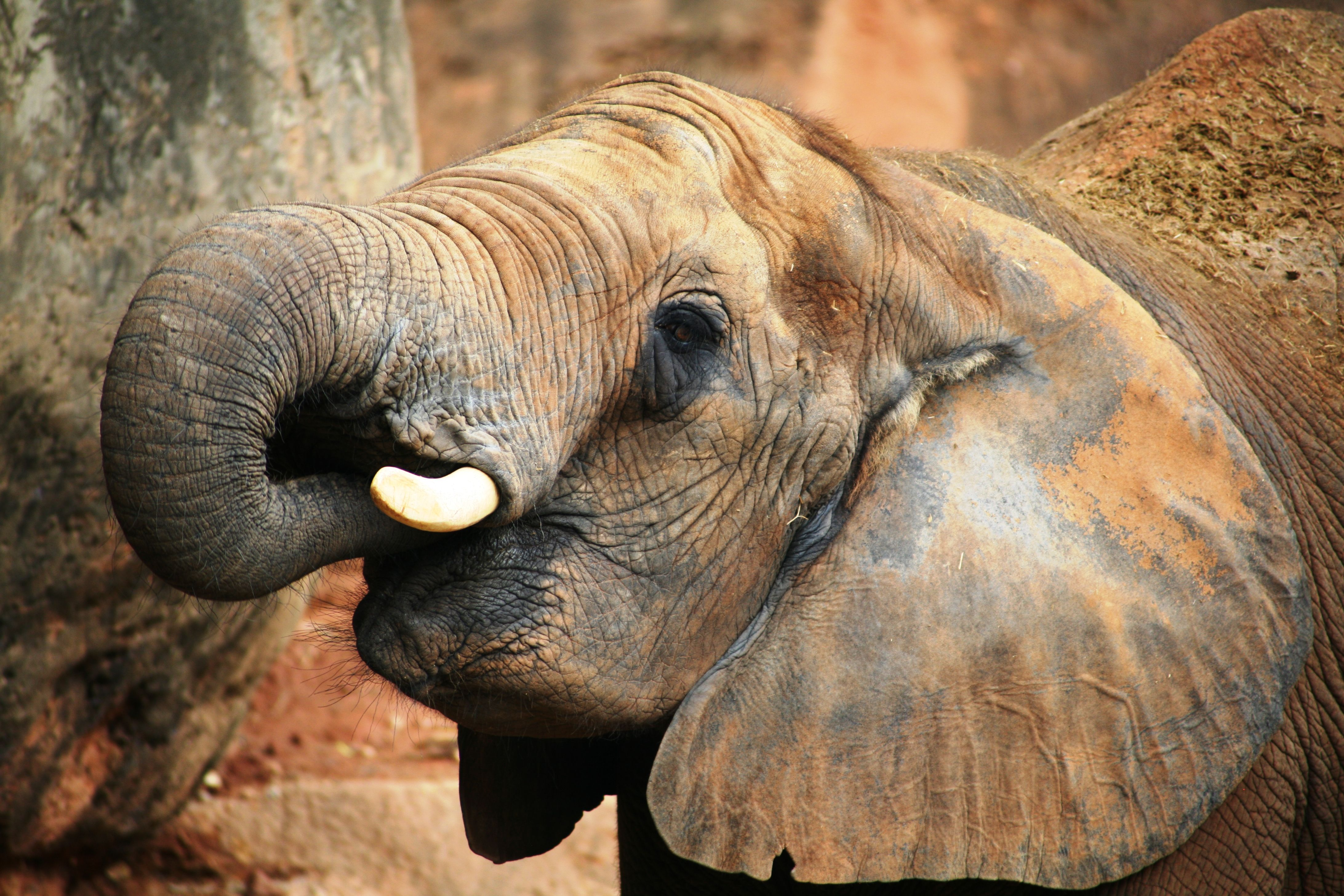 Elephants are often killed to sell their tusks online in a lucrative ivory trade.