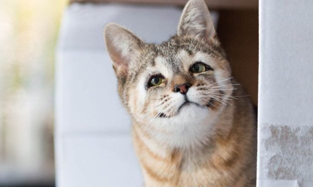 Cat Born With No Eyelids is All Smiles Now that Eyesight is Saved
