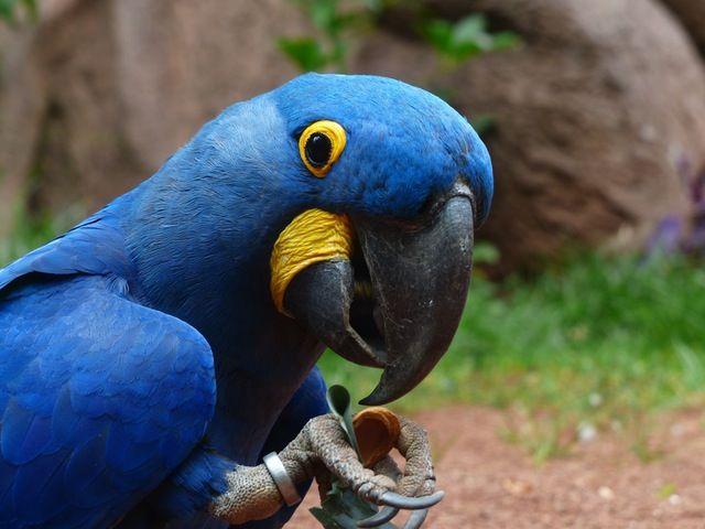 Parrots are often traded