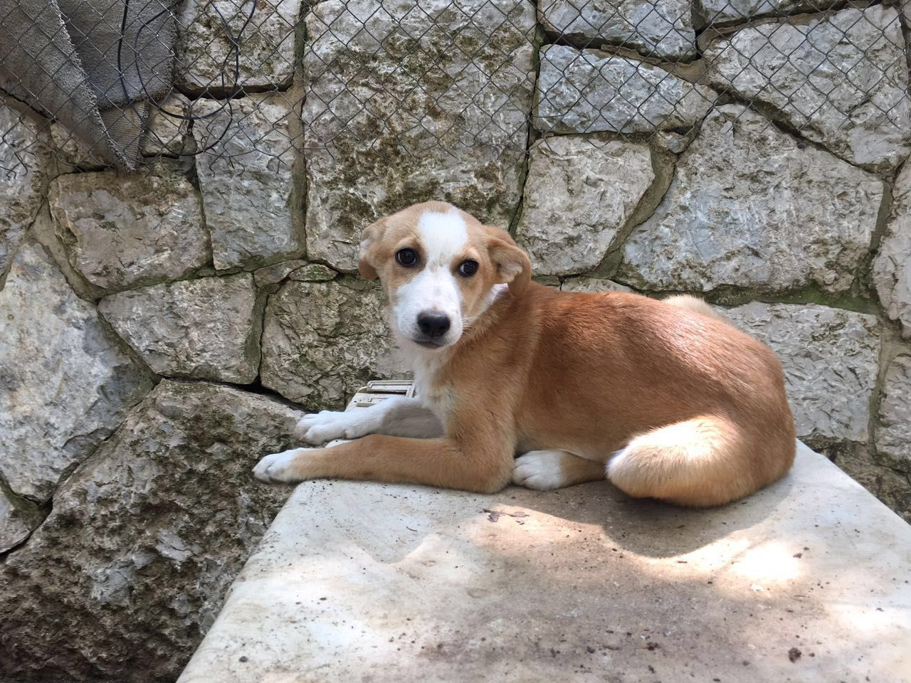 Dog rescued from Labanon