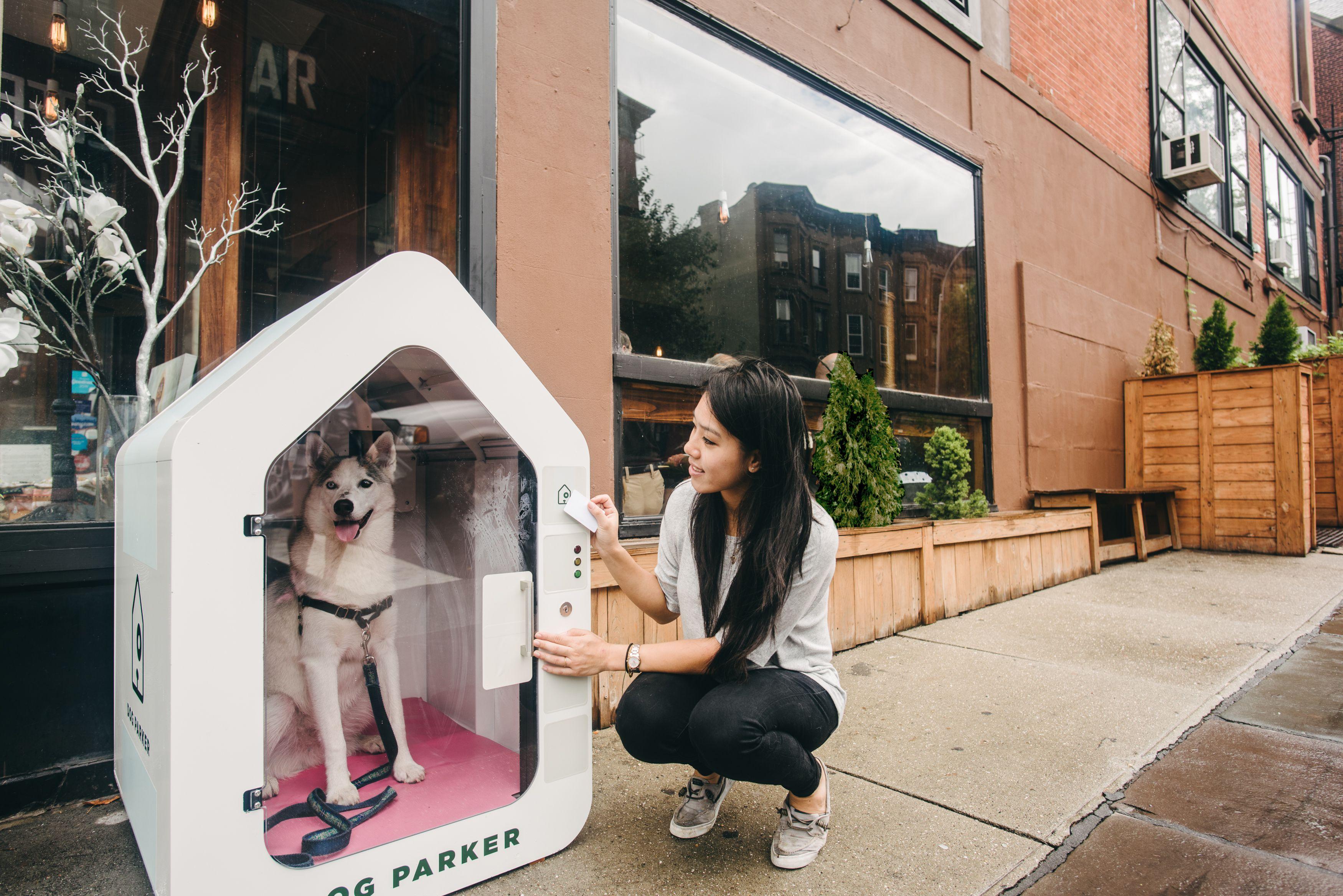 Pilot tester for Dog Parker with Husky