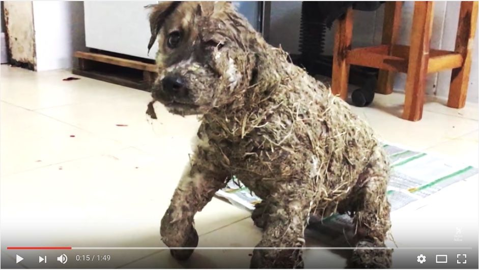 Puppy 'Drowned in Glue' by Cruel Kids Rescued Just in Time – VIDEO
