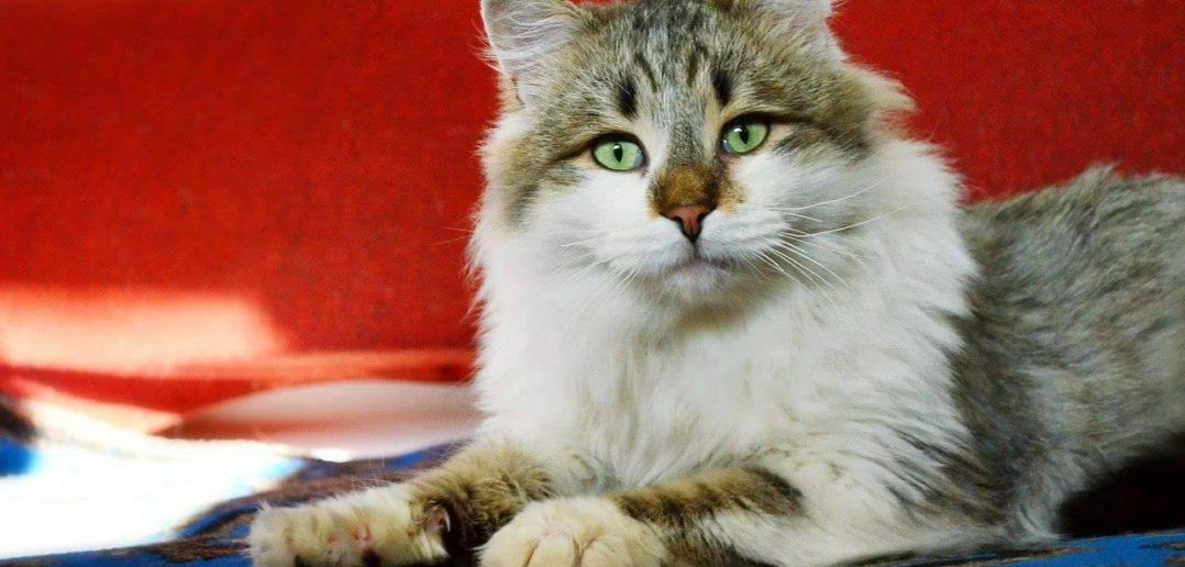 Rescue cat in Ukrainian shelter in risk of cold winter without electricity.