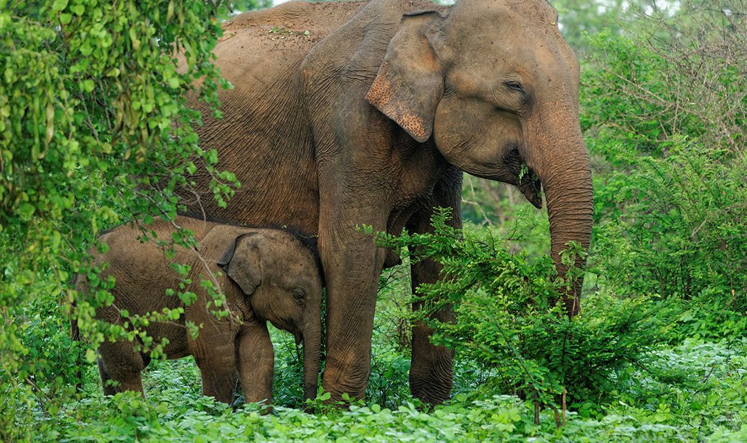 4 Amazing Vacation Adventures that Help Save Wildlife