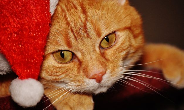 Study Says: Dogs Get More Than Twice as Many Christmas Presents than Cats
