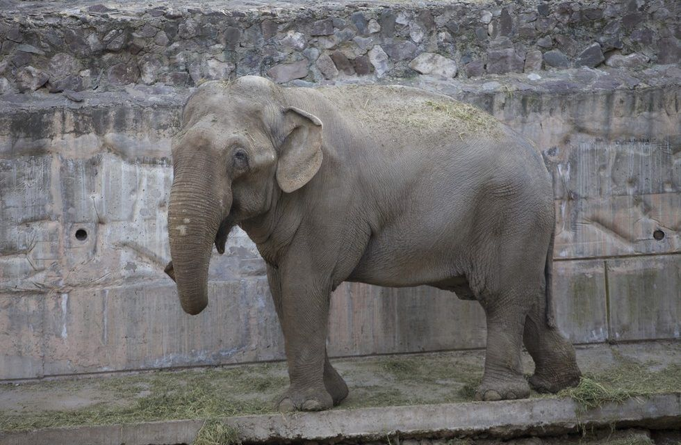 Victory! Zoo Sends All of its Captive Elephants to Live in a New Sanctuary