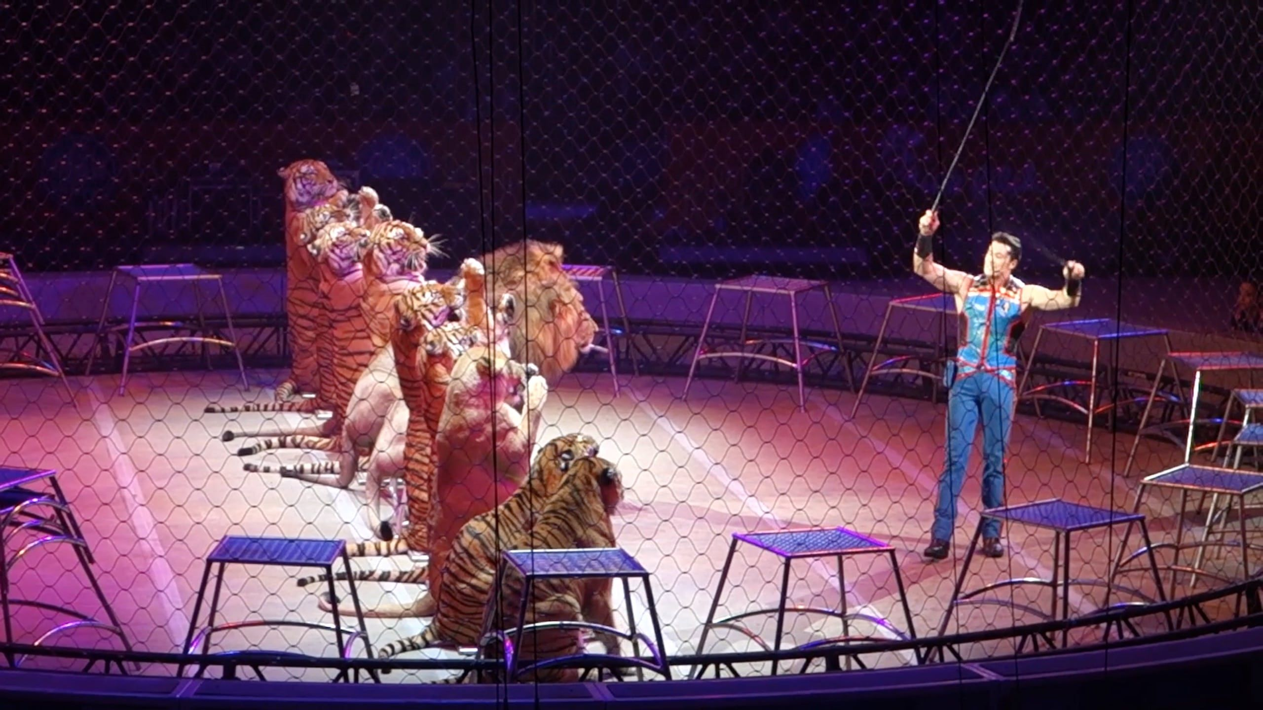 Tigers and lions perform at Ringling Bros. circus