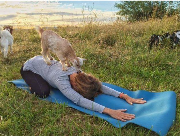 'Goat Yoga' is Changing People's Lives