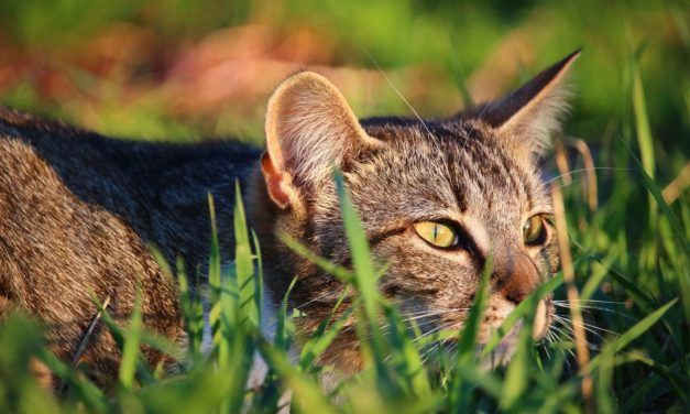 They're Lining Up to Adopt Feral Cats in Chicago