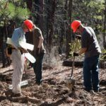 Sustainable Water Co. Aims to Plant 1 Million Trees using hashtag: #ReTree