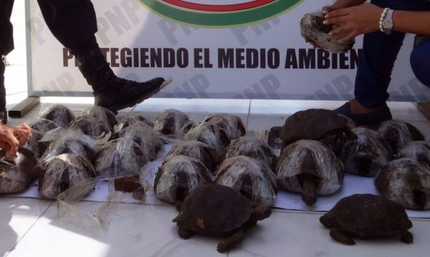 Smuggled Galapagos Tortoises Found Cruelly Wrapped in Plastic