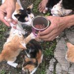 This Man Has Saved an Entire Village of Cats