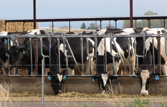 Cargill sells last cattle feed yards.
