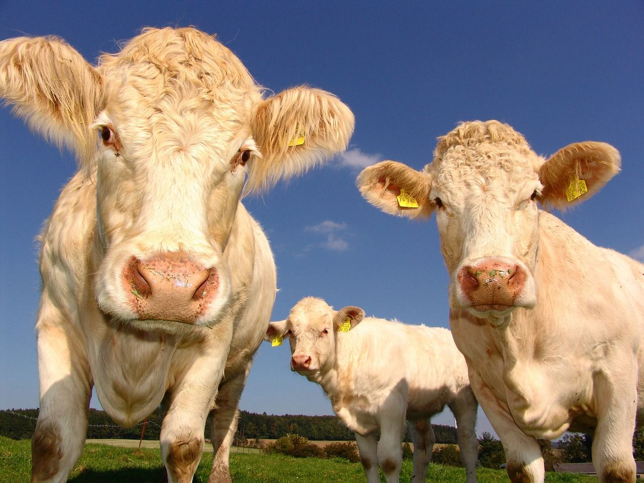 Cargill moves away from beef and toward plant proteing