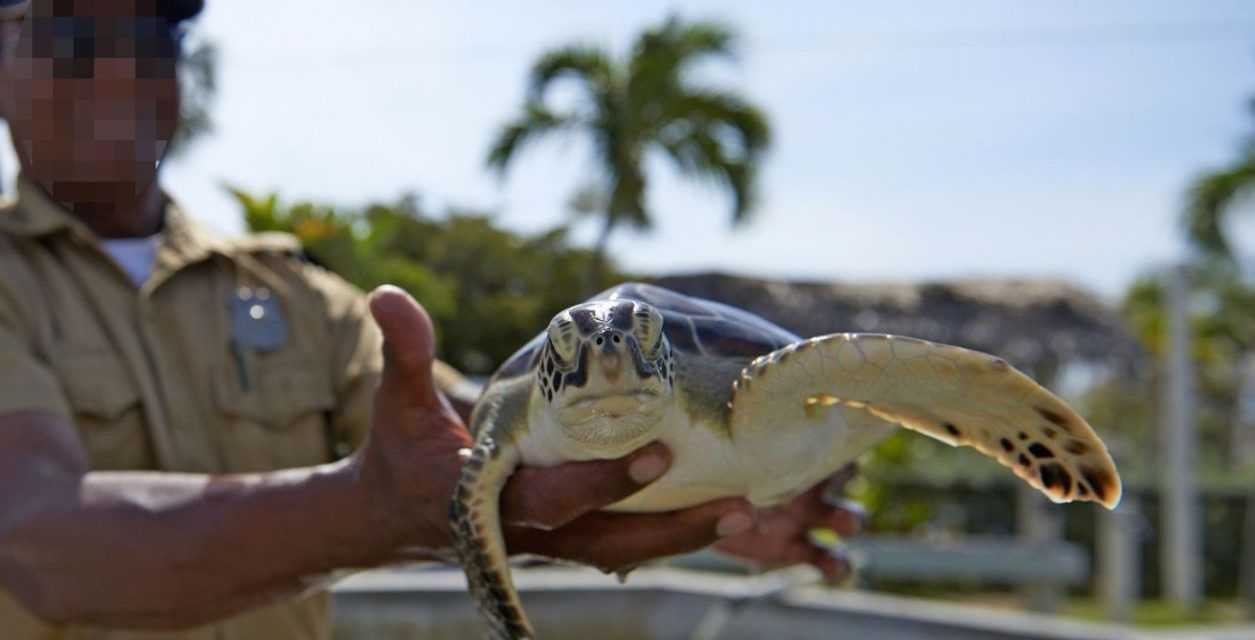 Petition Urges Carnival Cruises to Stop Promoting Cruel Sea Turtle Tourist Attraction