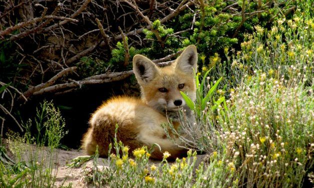 Victory! Germany is Closing Down Its Last Six Fur Farms