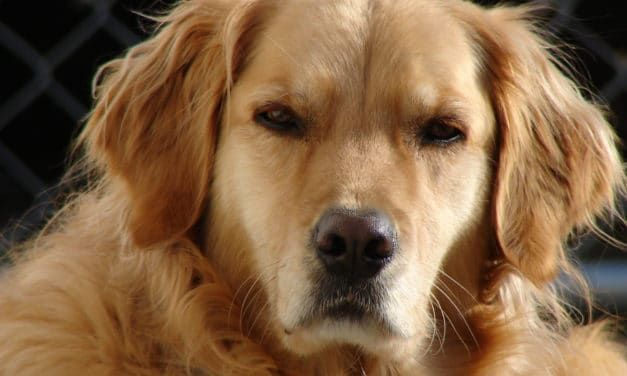 Study: Your Dog Knows When You're Being Unfair