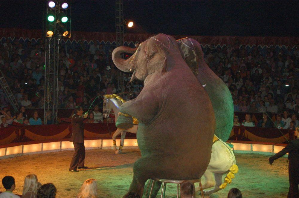 circus elephants