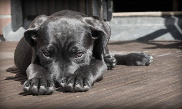 3 Stories That Prove We Need to Reform the Way We Treat Animals