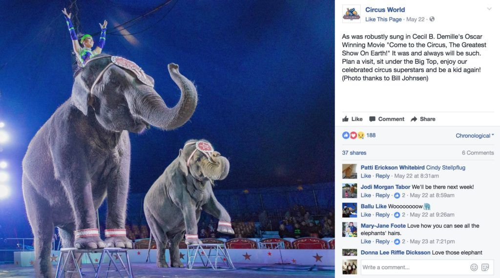Elephants perform in circus in Baraboo, WI.