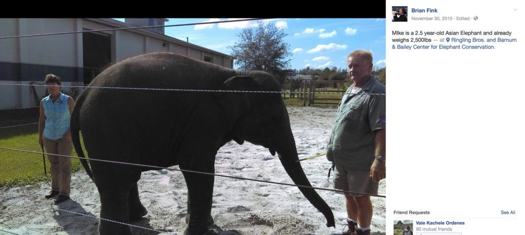 Elephants in captivity live shorter lives than wild elephants do.