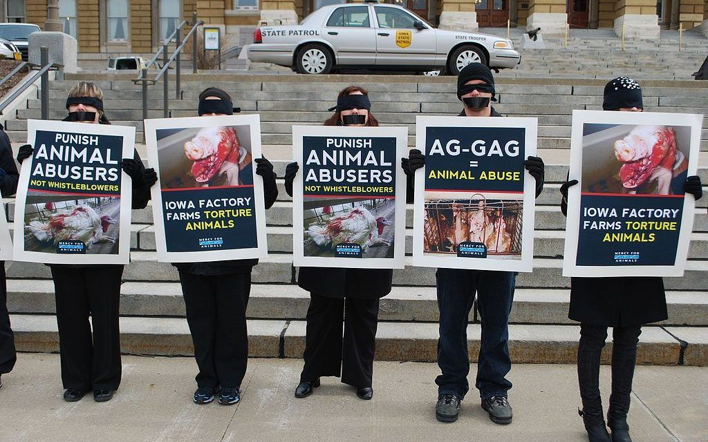 Victory! Federal Judge Strikes Down Utah 'Ag Gag' Law that Silenced Animal Activists