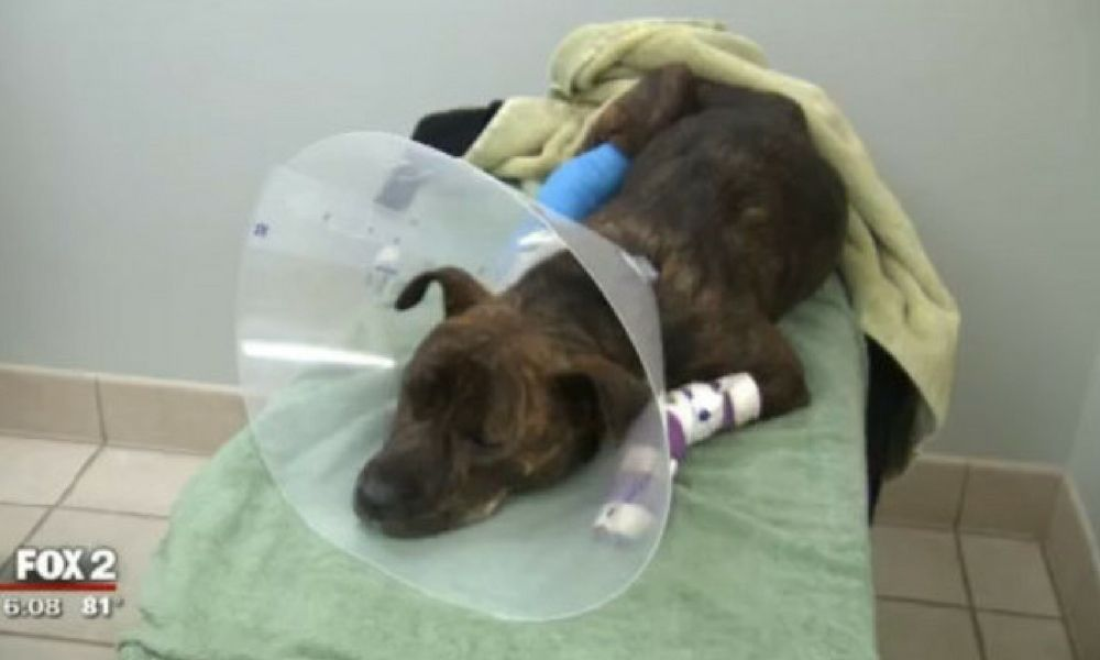 Sign: Justice for Jingles, the Dog Ruthlessly Dragged behind a Car