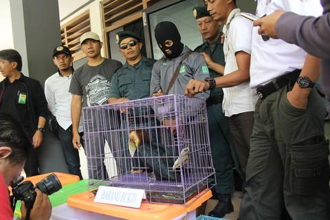 A slow loris in a cage surrounded by people. Nine Javan slow lorises were recently rescued. Get involved at Lady Freethinker.