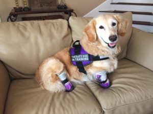 Nubz the therapy dog has prosthetic legs. See the whole story at Lady Freethinker.
