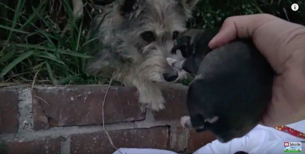 Video: Watch How Many Homeless Puppies Keep Popping Out of The Bushes