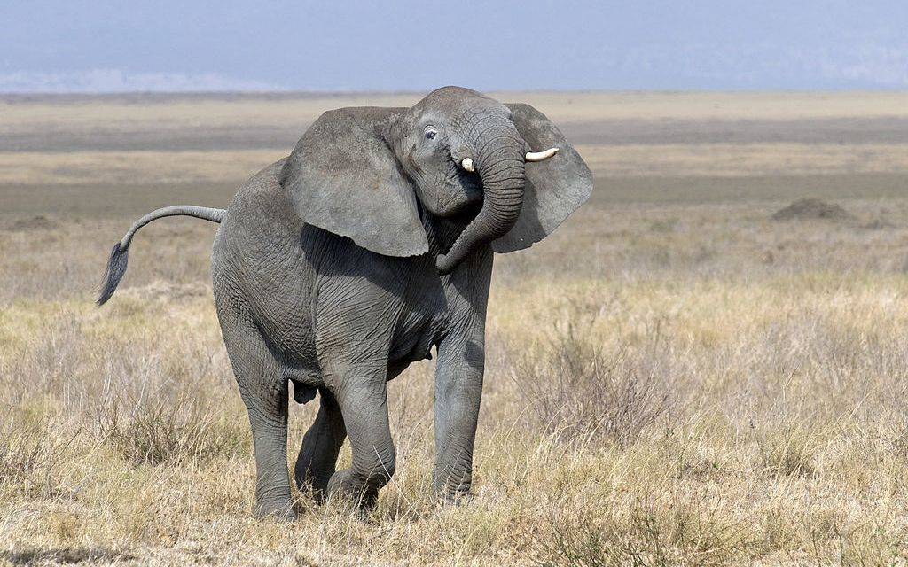 Trophy Hunter Fatally Trampled By Elephant He Tried To Kill
