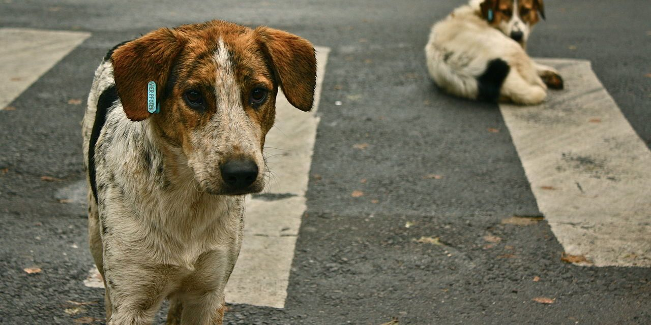 35 Stolen Dogs Rescued from Chinese Dog Meat Gang