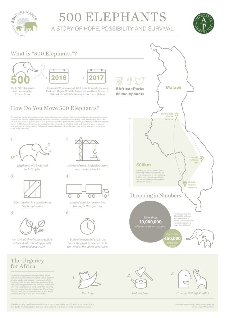 500 Elephants Infographic