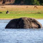 The World's Largest Elephant Relocation has been Successfully Completed